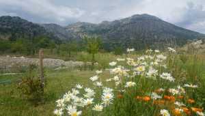Toroslar'ın eteklerinde açan çiçekler büyülüyor
