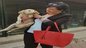 Pursaklar Belediyesi kimsesiz sokak hayvanlarını sahiplendiriyor