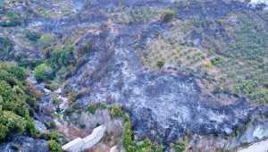 Hatay'daki orman yangınına müdahale sürüyor