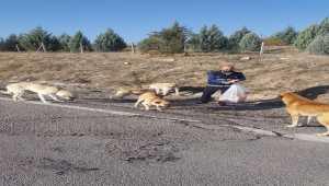 Kızılcahamam Belediyesi sokak hayvanlarına sahip çıkıyor