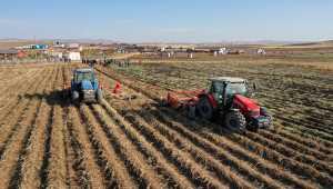Sivas'ta mor patates ve şeker pancarı hasadı yapıldı