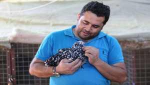 Süs tavuğu yetiştiricileri, yerli ırk tavukları dünyaya tanıtmak istiyor