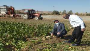 Ulaş'ta şeker pancarı hasadına başlandı