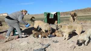 Ankaralı hayvansever aile, salgınla zorlaşan şartlara rağmen sokak hayvanlarını unutmuyor