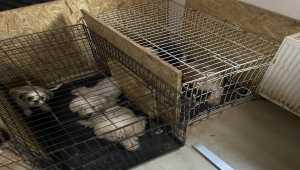 Başkentte bir binanın bodrum katında uygunsuz koşullarda tutulan 68 köpek bulundu