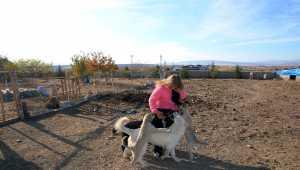 Sokak hayvanları için bahçeli ev kiralayıp beldeye yerleştiler