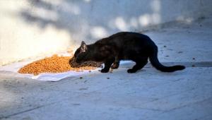 Beypazarı'nda sokak hayvanları unutulmadı