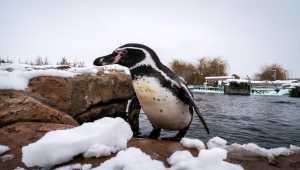 Hayvanat Bahçesi sahipleri karın keyfini çıkarıyor