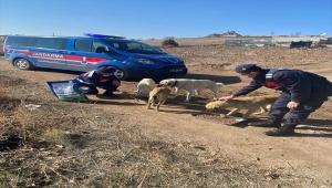 Karakeçili'de jandarma ekipleri hafta sonu kısıtlamasında sokak hayvanlarını unutmadı