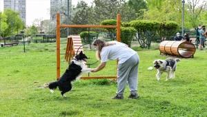 Ankara Büyükşehir Belediyesinden evcil hayvanlar için park