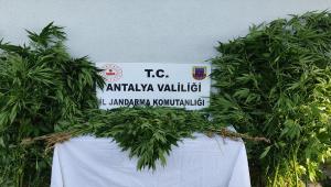 Antalya'da uyuşturucu operasyonunda 1 kişi yakalandı