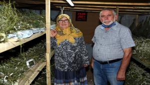 Emekli öğretim görevlisi hobi olarak başladığı ipek böceği yetiştiriciliğini gelir kapısına dönüştürdü