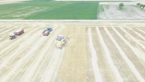 Tuz Gölü havzasında buğday ve arpa hasadı başladı
