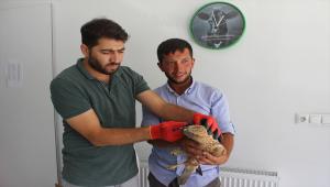Konya'da koyun otlatan çoban, yaralı bulduğu kartalı köpek saldırısından kurtardı