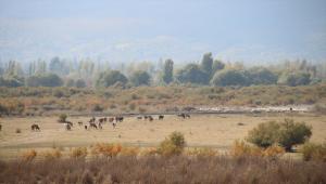 Tamamen kuruyan Akşehir Gölü'nün tabanında su bulundu
