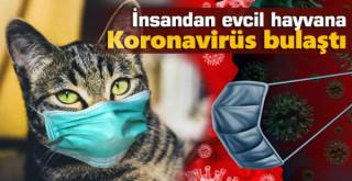 İlk kez insandan evcil hayvana koronavirüs bulaştı