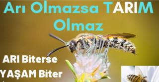 İlaçlama ile arı ölümlerine karşı uyarı