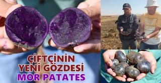 Çiftçinin Yeni Gözdesi Mor Patates
