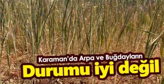 Karaman'da buğday ve arpaların durumu iyi değil